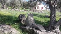 Lekker plekje in de olijfgaard.